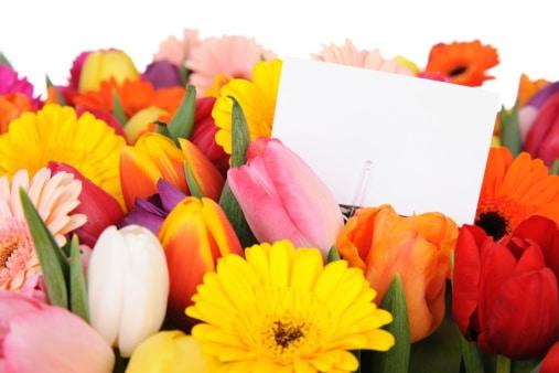 on vous dit tout sur le langage des fleurs guide plantes guide plantes. Black Bedroom Furniture Sets. Home Design Ideas