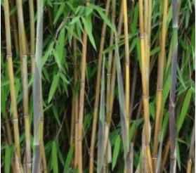 Jardin : quelle variété de bambou pour planter une haie ? | Guide ...