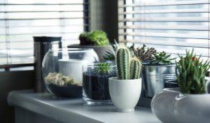 Plantes d'intérieur en pots devant une fenêtre