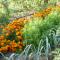 Plantes compagnes, compagnonnage et associations de légumes au potager
