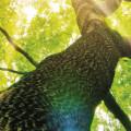 Les espèces d'arbre exploitées dans les forêts françaises
