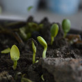 Peut-on apporter de la luminosité aux plantes d'intérieur avec des luminaires ?