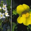 Fleurs annuelles pour un jardin raffiné