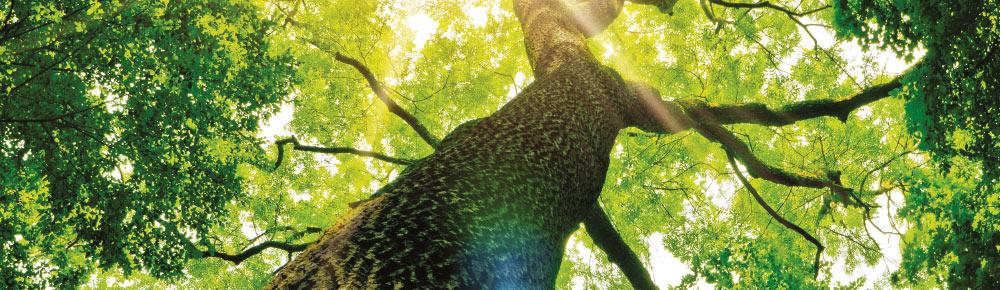 especes-d-arbre-exploitees-forets-francaises