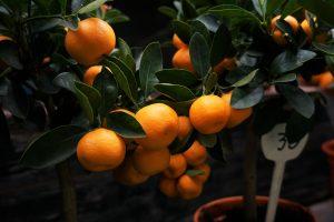 Quelles plantes faire pousser dans une véranda ?