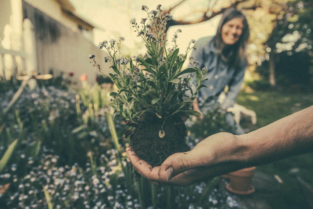 Homme qui tient une plante dans sa main et la montre à une femme qui sourit en arrière-plan